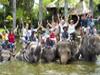 elephant-_safari-park_thmb.jpg